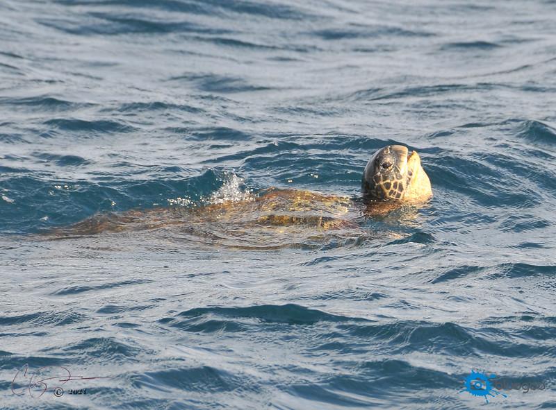 Hawaii Dive
