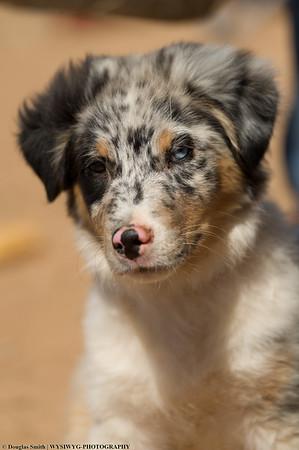 SASA Stock Dog Clinic March 19th