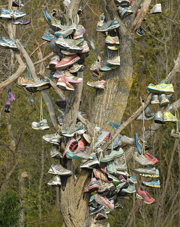 David Humphrey | For The Herald Bulletin<br /> Shoes from past participants at the IHSAA Cross Country State Finals hang from a tree near the course.
