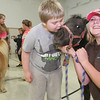 Miniature Horses and Students at Murray Ridge School :
