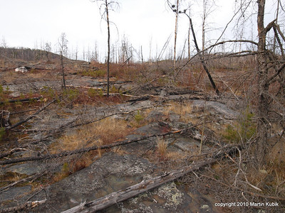 Ravaged by 1999 storm and fire several years ago, Magnetic Rock Trail yield powerful images.