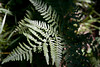 Loads of ferns....