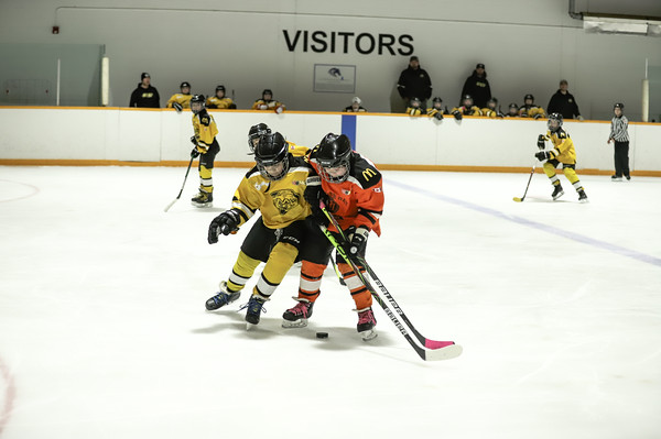 Med Hat Stoon Aces-0340