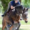 Horse Jumping at Golden Spike