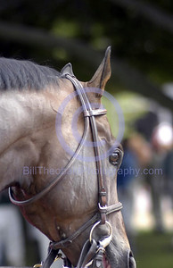 Up close and Personal.  Aportrait of a Thoroughbred in the Paddock at Monmouth park.