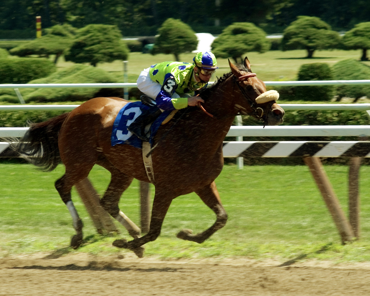 Sumwonlovesyou nears the finish in her Saratoga debut.  She led to the mid-stretch marker and was outfinished to be fourth.