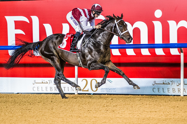 Storm Belt (USA) ridden by Patrick Dobbs wins Race 5, The Emirates Airline 1900m Dirt, at the First Race Meeting of the 20114-2015 Race Season, held at Meydan Racecourse, in Dubai, UAE on Thursday 6th, November, 2014.  Photo by: Stephen Hindley©