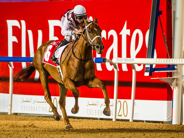 Centrifugal (IRE), ridden by Patrick Dobbs coming places second in Race 2, The Emirates Holidays 1400m Dirt, at the First Race Meeting of the 20114-2015 Race Season, held at Meydan Racecourse, in Dubai, UAE on Thursday 6th, November, 2014.  Photo by: Stephen Hindley©