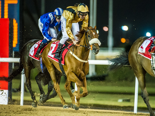 Ormindo (USA) ridden by Adrie De Vries places 4th in Race 3, at the First Race Meeting of the 20114-2015 Race Season, held at Meydan Racecourse, in Dubai, UAE on Thursday 6th, November, 2014.  Photo by: Stephen Hindley©