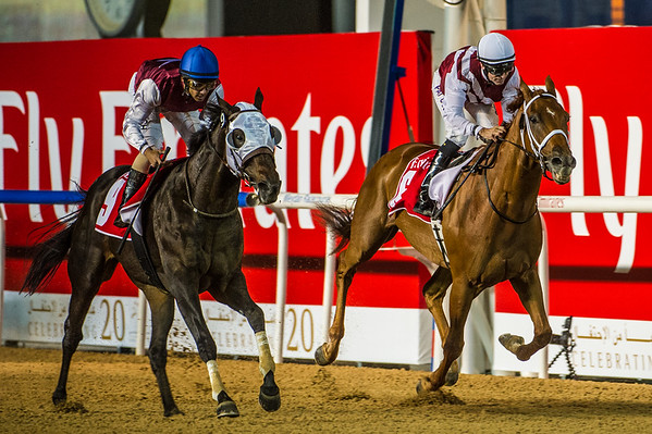 Street Act, (USA), on the left, ridden by Royston French, wins the 2nd Race, with Centrifugal (IRE), ridden by Patrick Dobbs coming in second, at the First Race Meeting of the 20114-2015 Race Season, held at Meydan Racecourse, in Dubai, UAE on Thursday 6th, November, 2014.  Photo by: Stephen Hindley©