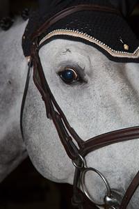 Arizona VDL (rider Nicole Lyvere)