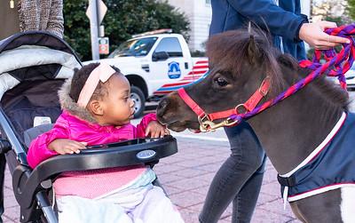 Washington International Horse Show