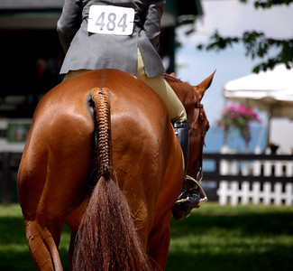 A horse and rider prepare to compete in the Upperville International Horse Show.