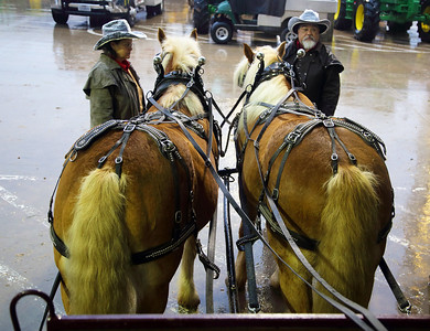 We're about join the Grand Parade.  This fine pair of horses will pull our wagon.