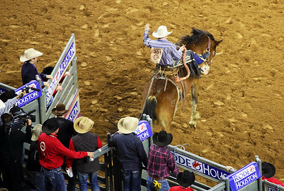 The gate opens and another saddle bronc rider is on his way.