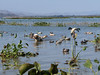 Cacería SV 12-14feb2010 019
