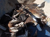 Cacería en SV 16 enero 2010 007