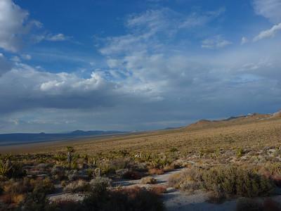 Mojave Quail 2010