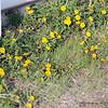 Spring at I-80