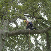 In the tree, Belay Speed - setting up the bells
