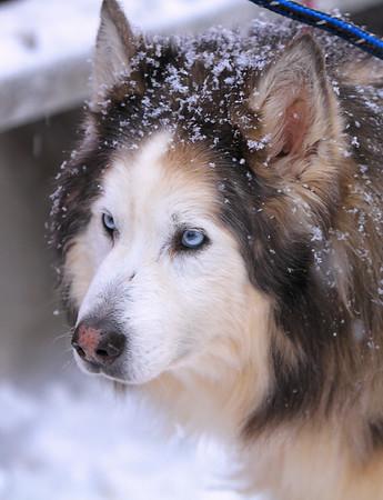 Iditarod XL - High hopes