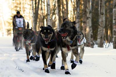 Iditarod XLII - The Beginning