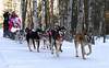 Starting her 30th Iditarod, DeeDee Jonrowe of Willow, Alaska
