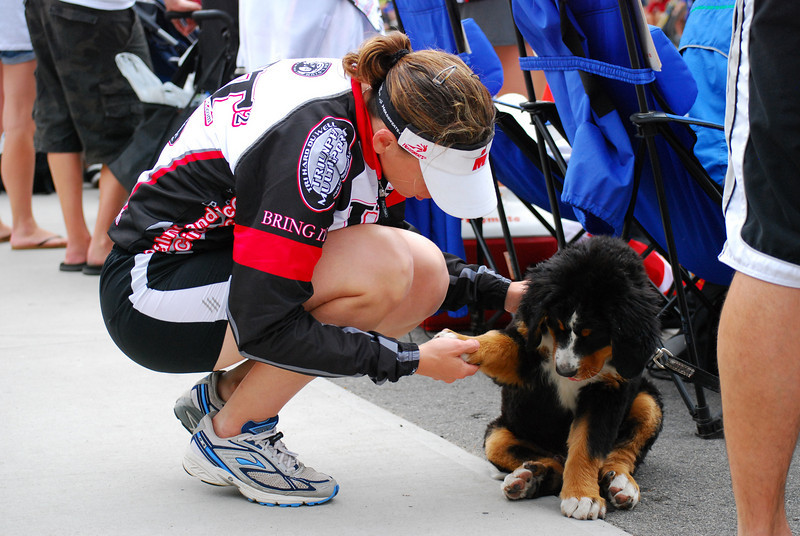 Char checking out the huge paws on this Bernese Mountain Dog puppy.