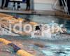 SJHS Dennis Dinwiddie Team Medley