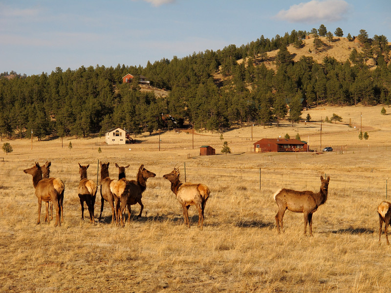 Trip with Kathryn Kananen (to Florissant, CO)