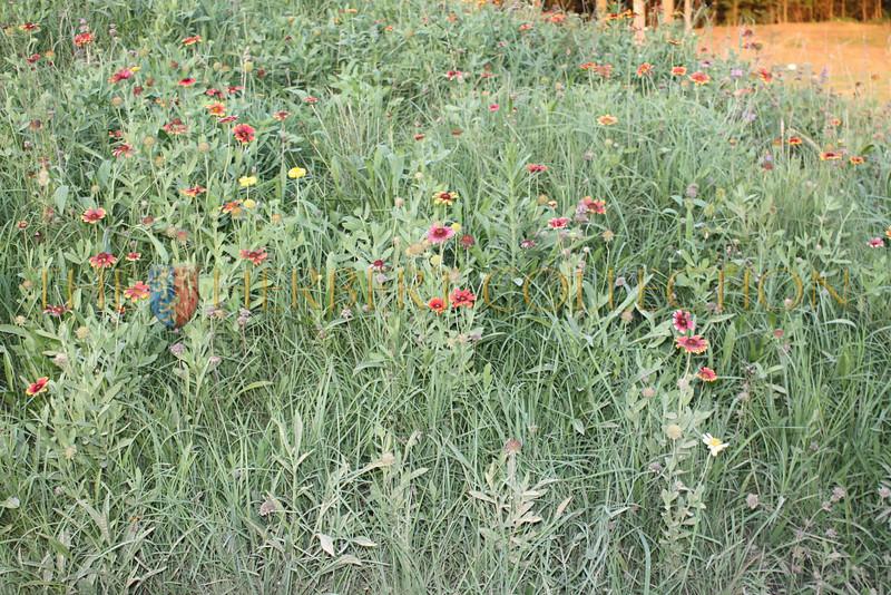 Wildflower field at Mirimichi
