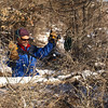 Tree removal step #1:  Nip the branches.  Here Fiskars geared loppers work with ease.