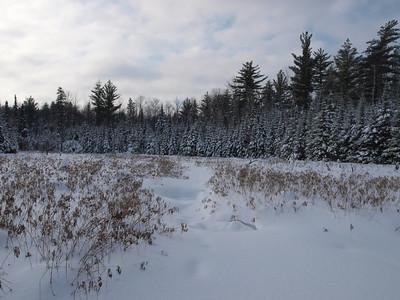 Beaver pond between the Kek and Parent L.