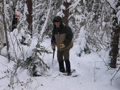 Norm is eyeing this balsam fir.