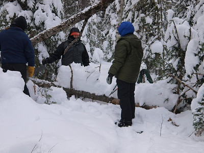 Dave is scoping out how the crew will cut this tree.  Winter trail clearing poses special challenge, and safety concerns.  For example, moving out of the way quickly with snowshoes on can be tricky!