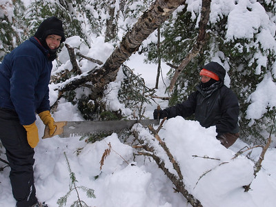 Jane and Dave are dispatching the balsam fir to sawdust.