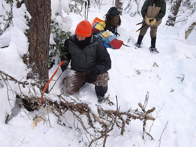 After lunch, Dave starts trail clearing.  This tree had a foot of snow on the top.