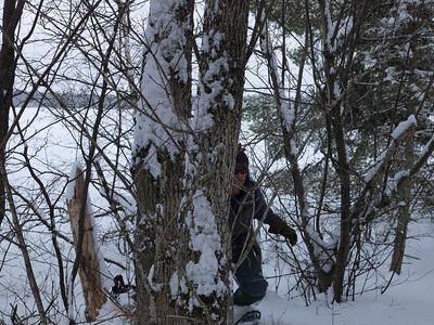 Dave rounding the tree.