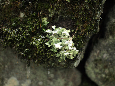 Fungus, moss and lichen thrive in moist, humid and cool fall.
