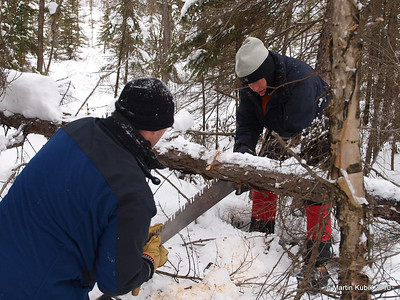 Here, cutting the black spruce, the saw was (is this an anagram?)  binding.   One remedy is to cut from below and it requires light touch.