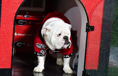 Scenes from the game between University of Georgia and the   University of Kentucky Saturday, October 19, 2019 at Sanford Stadium in Athens, Georgia. (Photo: Nicole Seitz)