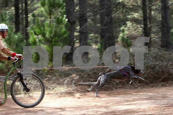 Kowen 2009 - Sunday 1 Dog Race