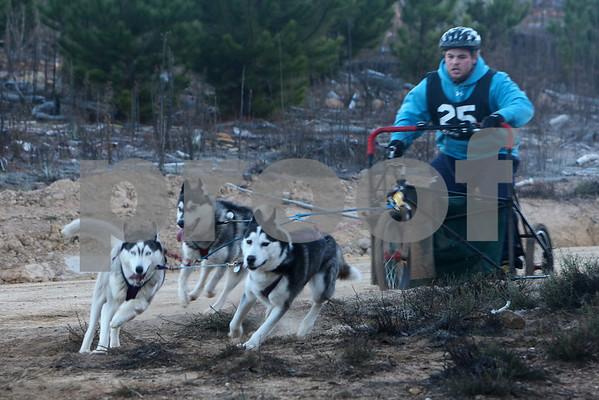 Kowen 2009 - Sunday 4 Dog Race