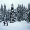 Cross country skiers, Lolo Pass, Montana