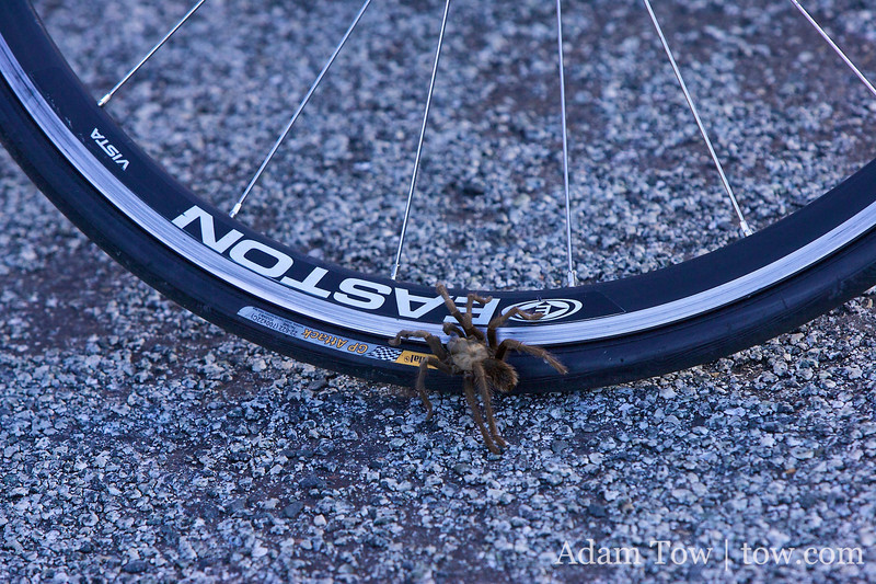 The spider is ready for its own low-key hillclimb!