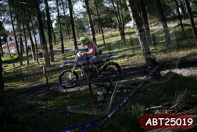 ABT25019