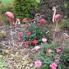 MIHS Flamingo