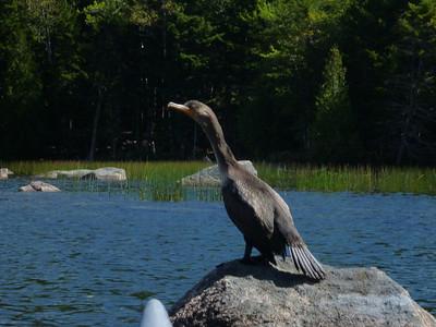 Maine 2013 Paddling