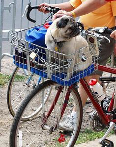 Canine Race Fan