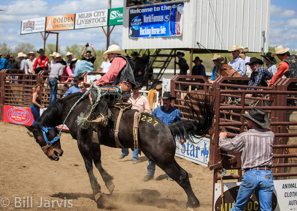 Bucking Horse Sale is also an auction